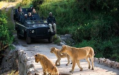 مشارکت در پارک های حیات وحش آفریقای جنوبی